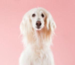 Dog%20on%20Pink_edited.jpg