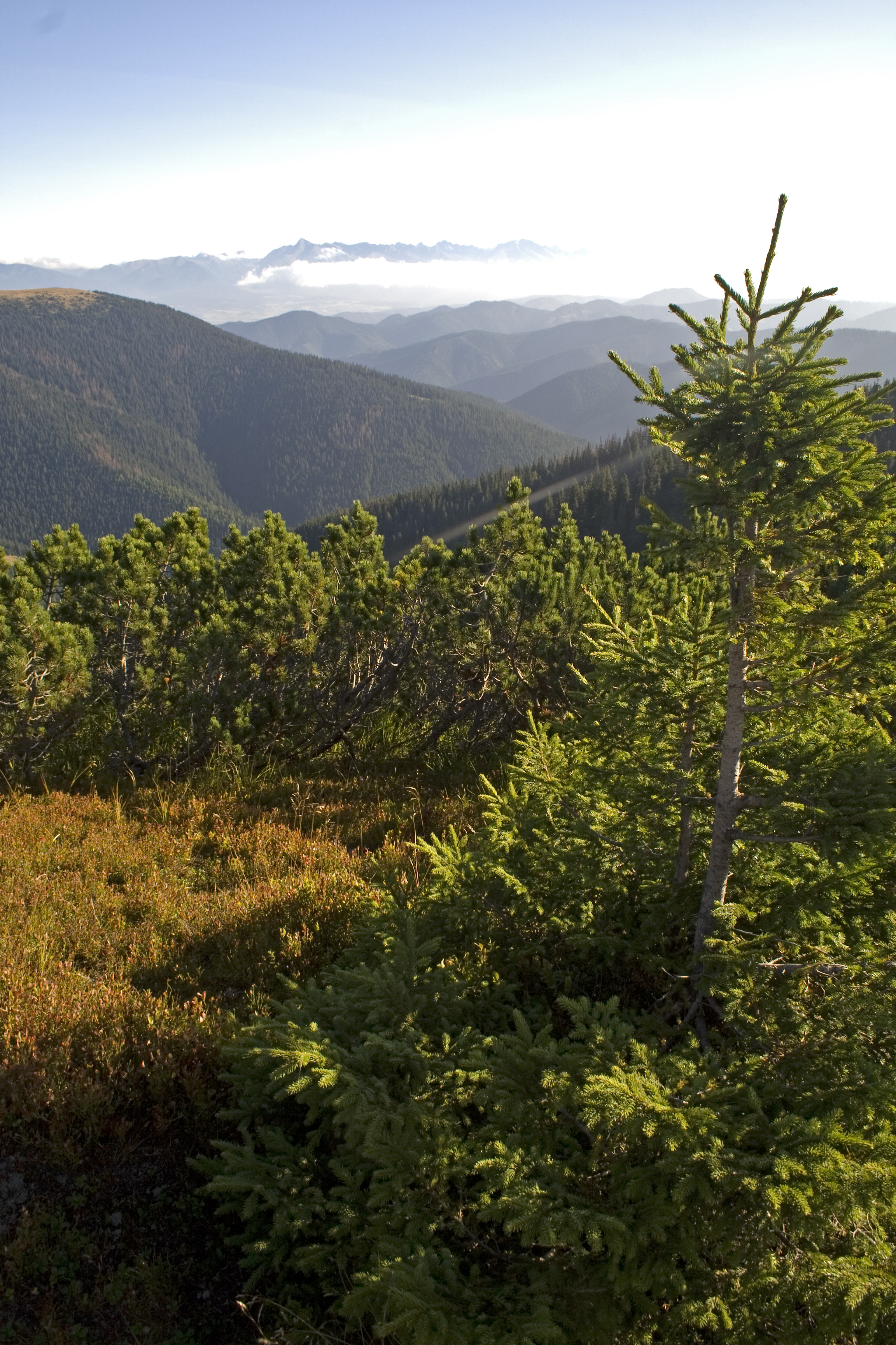 High Tatras fauna