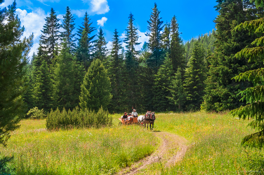 slovakia-high-tatras-horse-and-carriage-summer