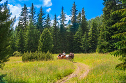 slovakia-high-tatras-horse-and-carriage-summer