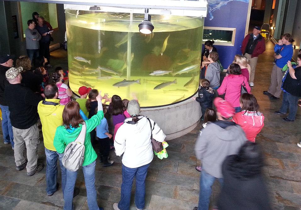 Huntsman Fundy Discovery Aquarium Salmon