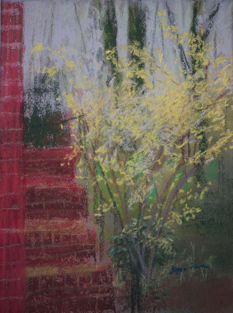 Forsythia by the Side Porch