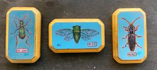 Triptych I Specimens