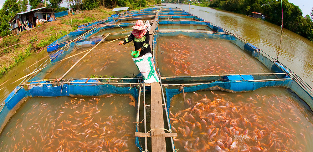 Small-Scale Fish farming