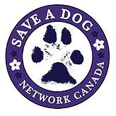 save a dog network.jfif