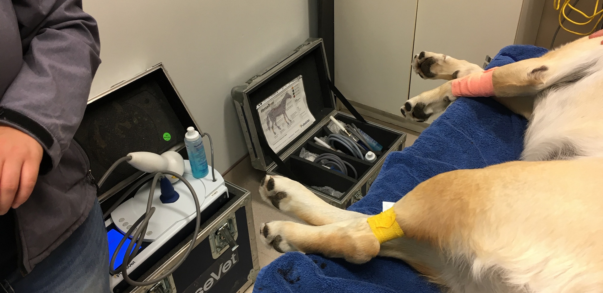 Canine Ultrasound