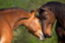 horses nose to nose.jpg