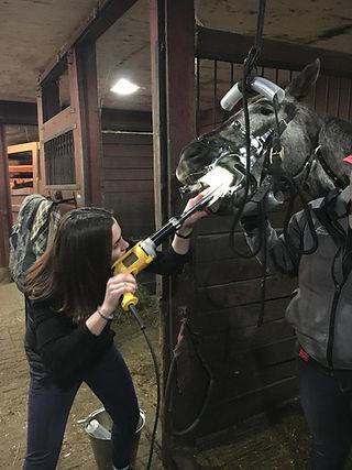 Floating a horses teeth