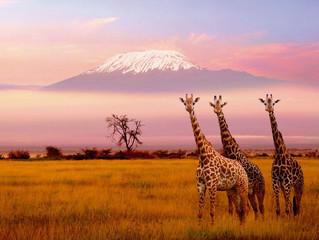 Le tourisme en Afrique en 2017 : classement, bilan et vision