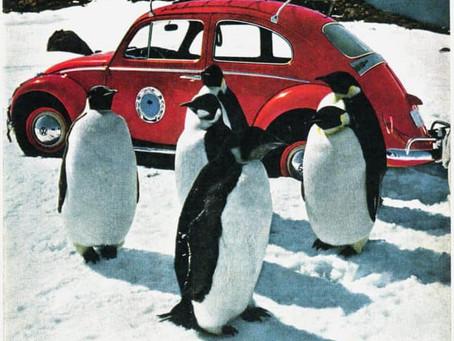 VW Beetle Antarctica : des Coccinelle chez les Manchots