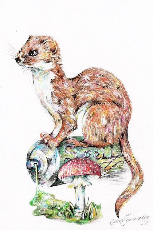 The Weasel - Original drawing