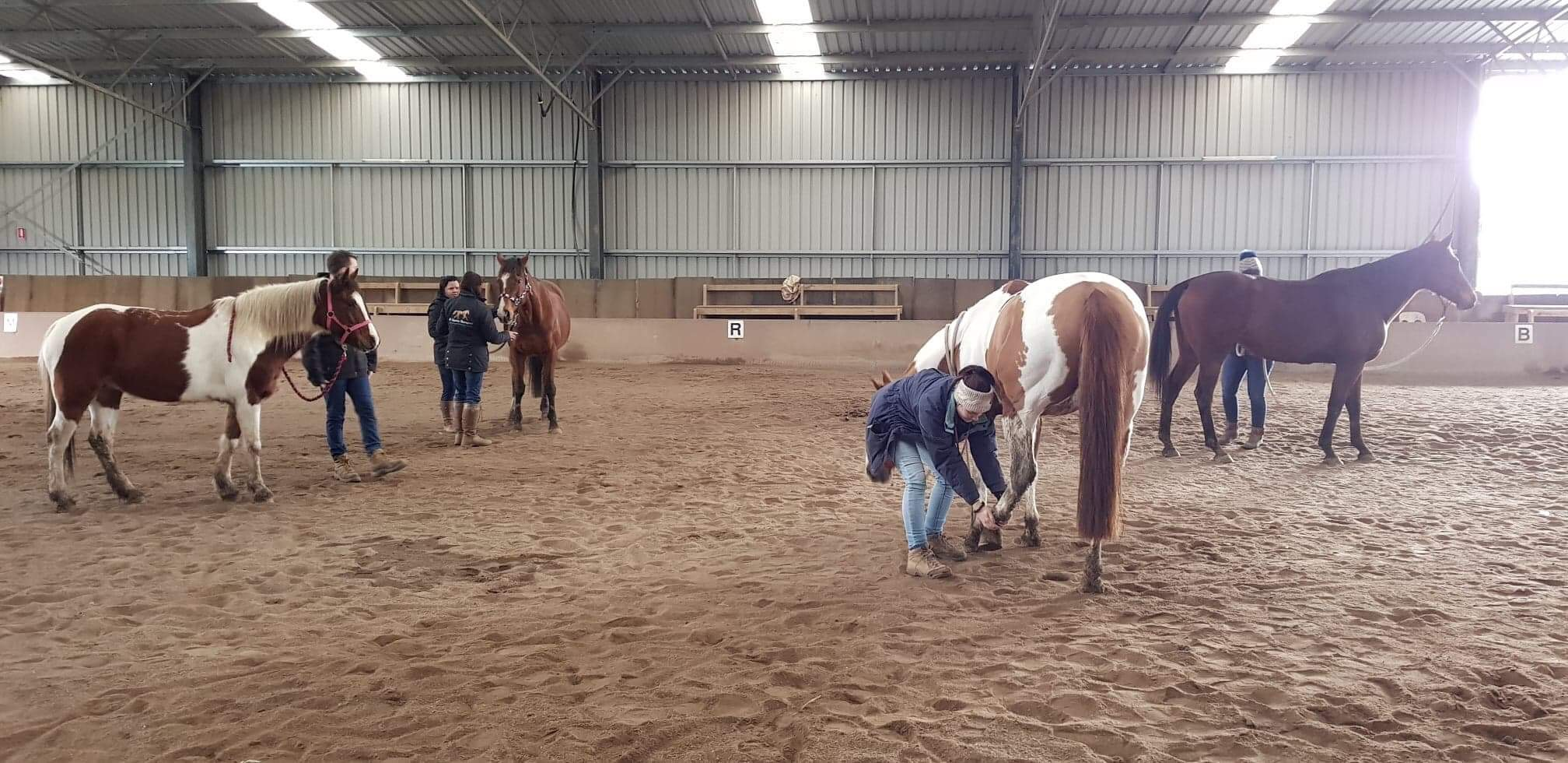 Balanced Equine Body and Mind Clinic