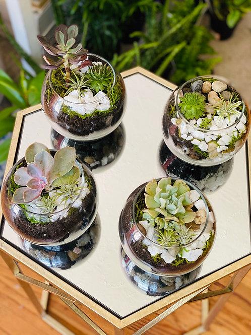 Succulent Terrariums (No Shipping)