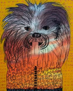 Brown Eyed Shaggy Dog Spirit - sold