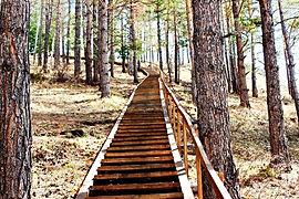 Лестница на смотровую площадку Монахово.