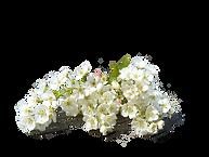 remediumplanta.ru сайт о целебных свойствах лекарственных растений.