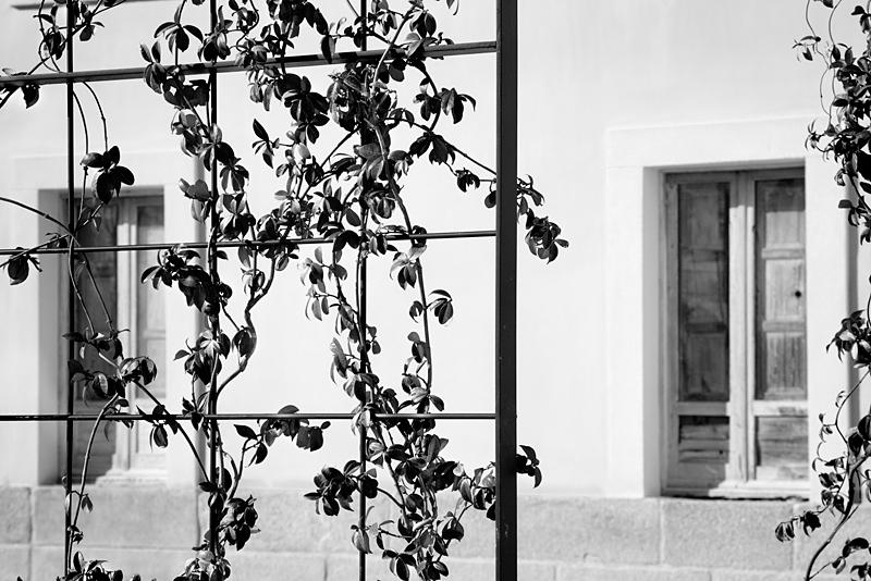 Jardines del palacio (4)