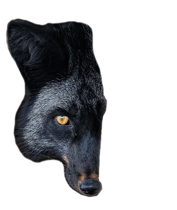 meia-raposa-1.png