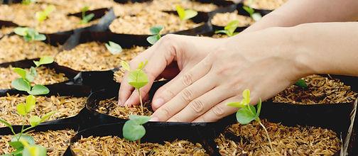 Растущие растения