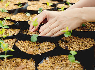 Les plantes qui poussent
