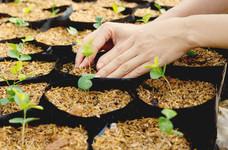 Growing 'inner strength' seeds…