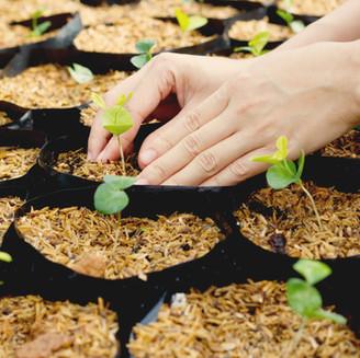 Seeding Marketing Efforts in Blackbaud CRM™