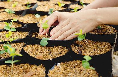 Mains en train de jardiner jeunes pousses