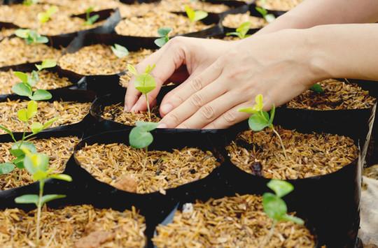 Plantas em crescimento