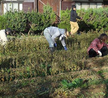 大豆収穫.jpg