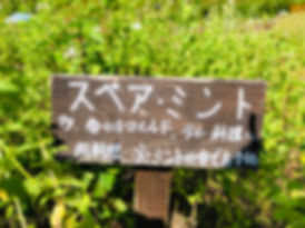 IMG_4232.jpg
