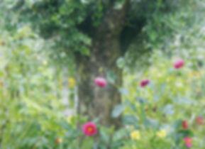 aromajourney_garden.JPG