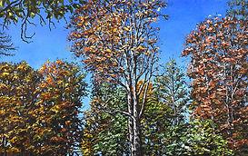 AutumnTrees-1048.jpg