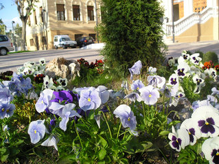 jardines Poveda.JPG