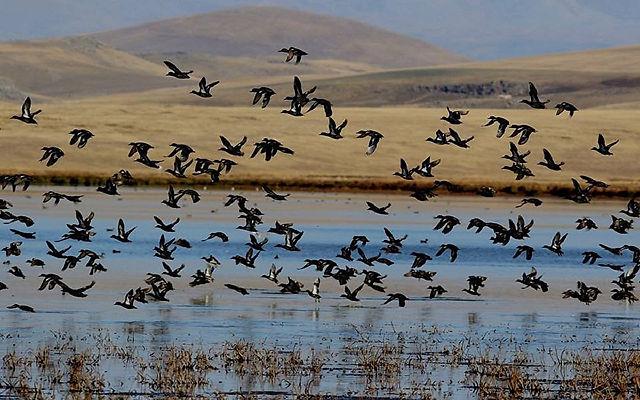 Грузия Национальный парк Джавахети Ахалцихе