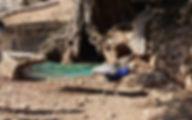Греция Закинф Каменный парк Аскос