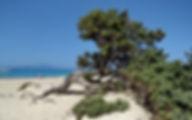 Греция Крит Остров Хриси область Лассити