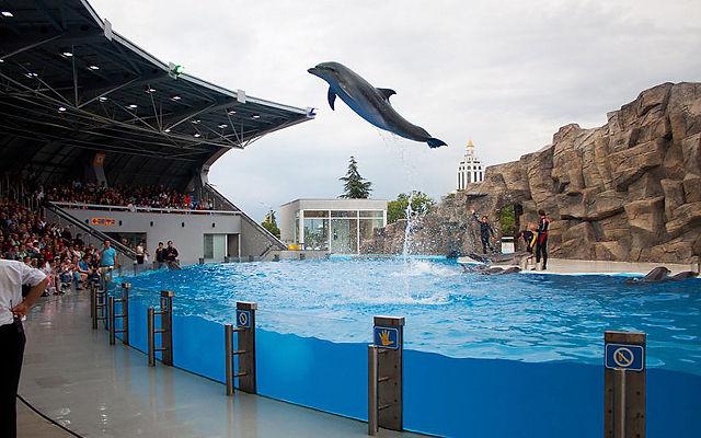 Грузия Батумский дельфинарий Батуми
