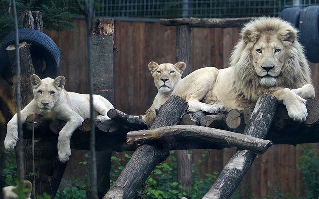 Грузия Тбилисский зоопарк Тбилиси