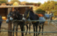 Кипр Парк «Друзья кипрских осликов» (Лимассол)