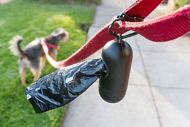 dog-poop-bags-lowres-9189.jpg