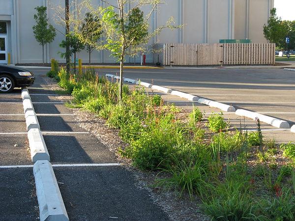 Parking Lot Rain Garden.jpg