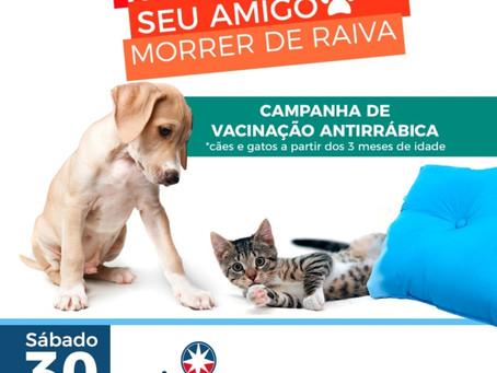 Dia D de vacinação para cães e gatos; confira os locais