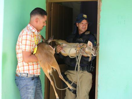 Agentes resgatam mais de 290 animais em mais um dia de Fiscalização Preventiva Integrada (FPI), na r