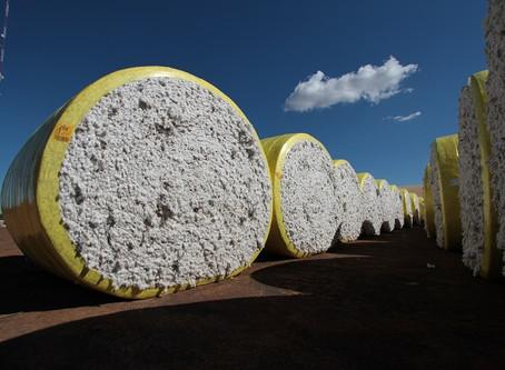 Brasil finaliza colheita de uma nova safra recorde de algodão