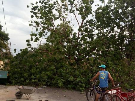 Árvore cai e interdita Av. Aylon Macedo em Barreiras