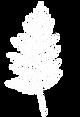 White Cedar Bough.png