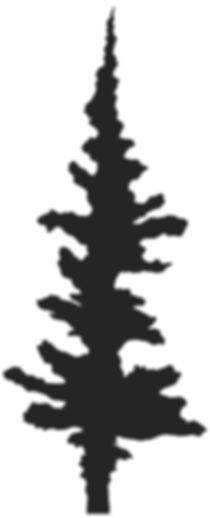 Shadows_Tree Silhouette.jpg