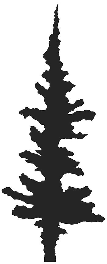 Shadows_Tree Silhouette.jpg