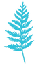 Cedar Bough_Blue.png