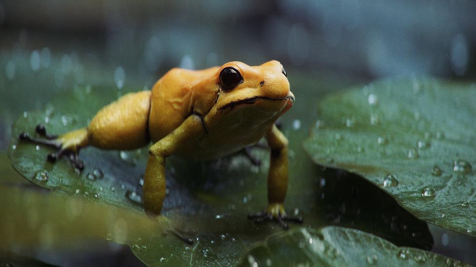 frog_scene_v02.jpg